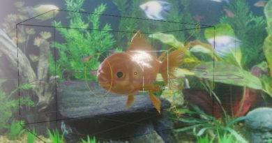 Blender Addon Review: お魚の動きを簡単セットアップ(FishSim)